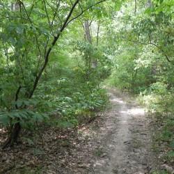 Fox_Run_Trail
